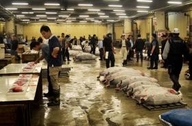 Tuna acution in Tokyo, Japan