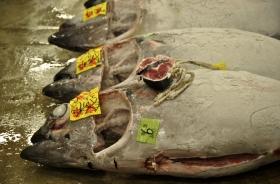 The end of tuna romance