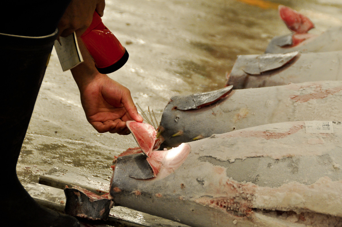 Tuna quality control