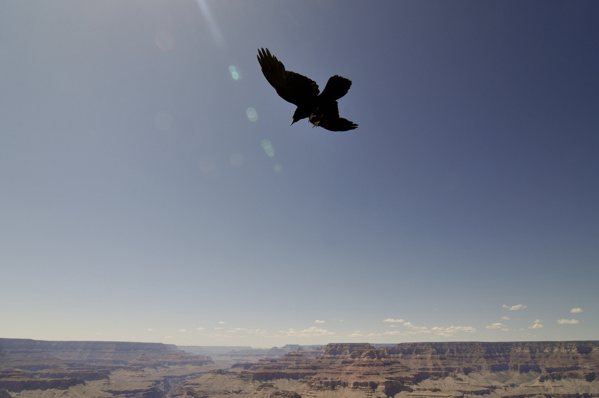 galleries-grand-canyon-6